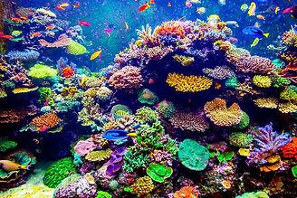 Colorful coral reef.jpg.696x0_q71_crop-s