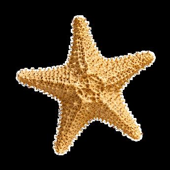starfish_PNG15.png