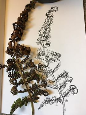 Hedgerow drawing