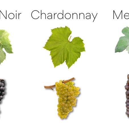 Meunier - The Most Champenois of Grape Varietals