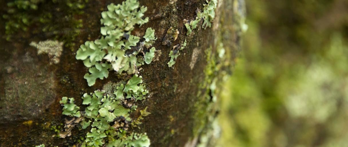 tree_2.JPG