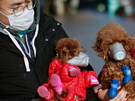 O Coronavírus e o preconceito com os animais