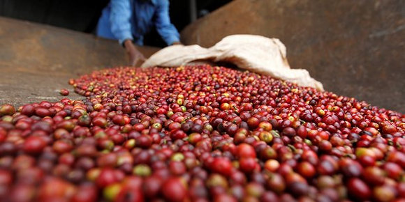 Café Ouganda Volcan Mont Elgon - 250g