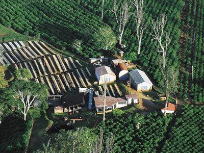 Café Kenya Hauts Plateaux de Kiambu - 250g