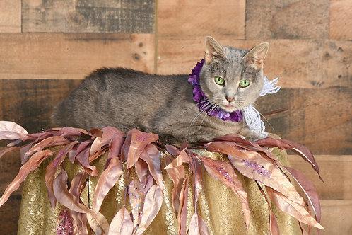 Floral & Lace Pet Accessory