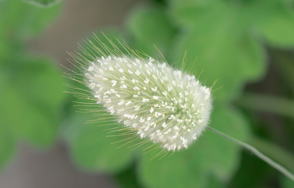 Dandelion-like flower
