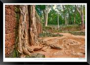 Trees of Angkor Thom - 015 - Jonathan va