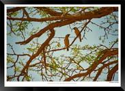 Birds_of_Namibia_-_009_-_©_Jonathan_van