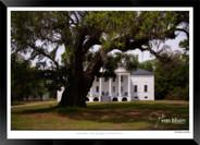Images of Charleston -  IOSC- 005.jpg