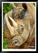 Images of East Africa - 026 - © Jonathan van Bilsen.jpg