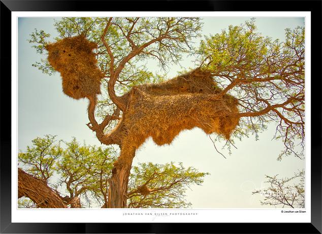 Birds_of_Namibia_-_005_-_©_Jonathan_van