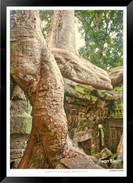 Trees of Angkor Thom - 019 - Jonathan va