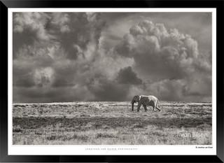 Elephants_of_Etosha_-_002_-_©_Jonathan_v
