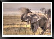 Elephants_of_Etosha_-_019_-_©_Jonathan_v