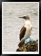 Images of the Galapagos Islands - 011 -