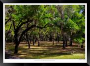 Images of Charleston -  IOSC- 002.jpg