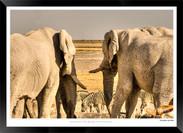 Elephants_of_Etosha_-_006_-_©_Jonathan_v