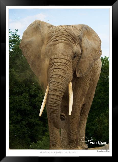 Elephants_of_the_Serengeti_-_011_-_©_Jo
