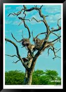 Images of East Africa - 009 - © Jonathan van Bilsen.jpg