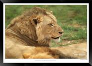 Cats_of_Africa_-_016_-_©_Jonathan_van_B