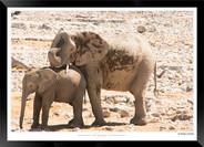 Elephants_of_Etosha_-_009_-_©_Jonathan_v
