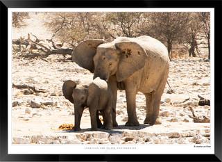 Elephants_of_Etosha_-_008_-_©_Jonathan_v