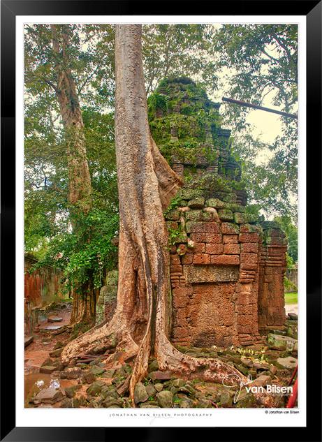 Trees of Angkor Thom - 007 - Jonathan va