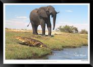 Elephants_of_the_Serengeti_-_002_-_©_Jo