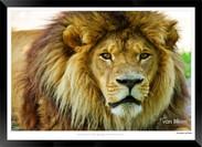 Cats_of_Africa_-_014_-_©_Jonathan_van_B