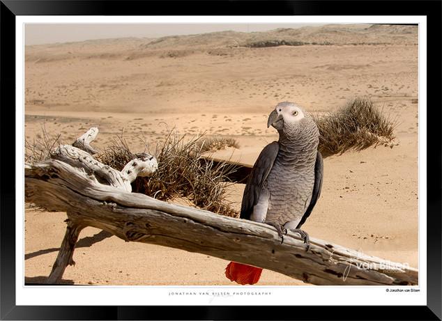 Birds_of_Namibia_-_002_-_©_Jonathan_van
