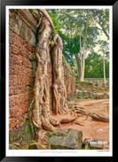 Trees of Angkor Thom - 014 - Jonathan va