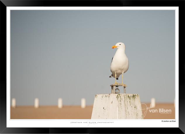 Birds_of_Namibia_-_031_-_©_Jonathan_van