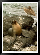 Images of the Galapagos Islands - 005 -