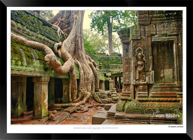 Trees of Angkor Thom - 017 - Jonathan va
