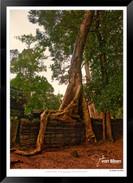 Trees of Angkor Thom - 003 - Jonathan va