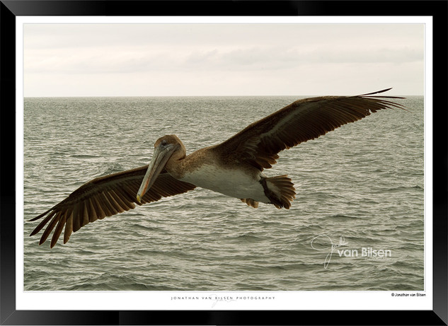 Images of the Galapagos Islands - 003 -