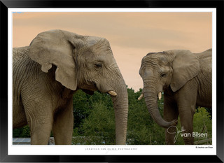 Elephants_of_the_Serengeti_-_003_-_©_Jo
