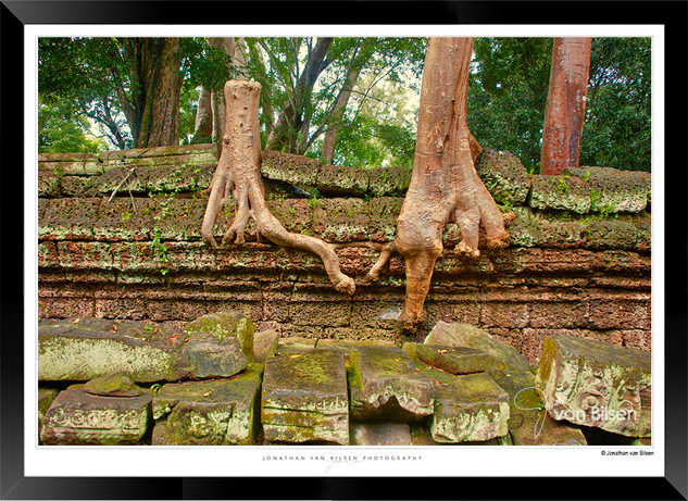Trees of Angkor Thom - 024 - Jonathan va