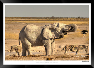 Elephants_of_Etosha_-_022_-_©_Jonathan_v