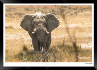 Elephants_of_Etosha_-_020_-_©_Jonathan_v