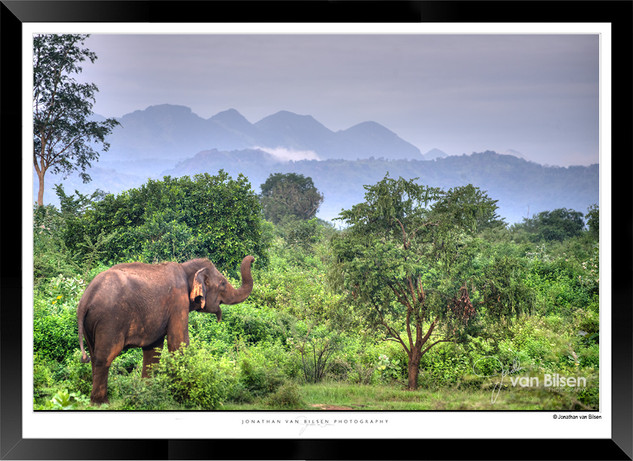 Elephants of Sri Lanka -  IOSR- 024.jpg