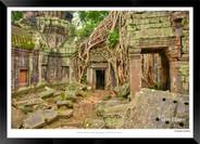 Trees of Angkor Thom - 001 - Jonathan va