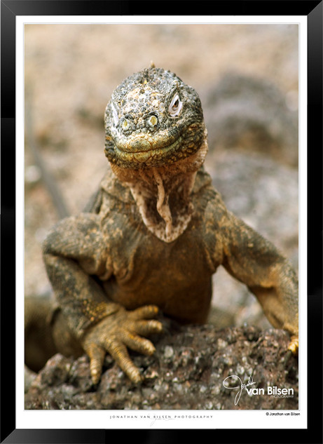 Images of the Galapagos Islands - 010 -
