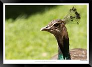 Birds_of_Namibia_-_010_-_©_Jonathan_van