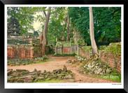 Trees of Angkor Thom - 009 - Jonathan va