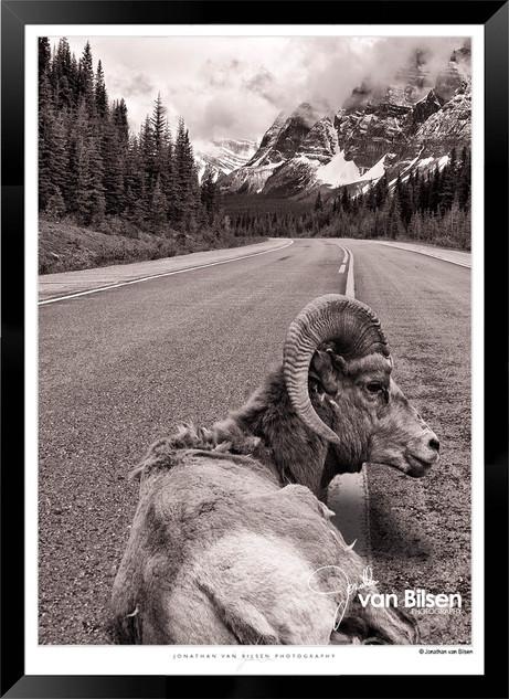 Beasts_of_Canada_-_006_-_©_Jonathan_van