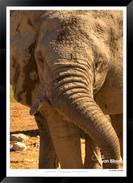 Elephants_of_Etosha_-_017_-_©_Jonathan_v
