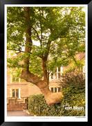 Images_of_Hampton_Court_-_004_-_©Jonath