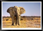 Elephants_of_Etosha_-_021_-_©_Jonathan_v