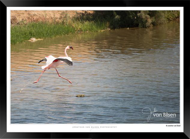 Birds_of_Namibia_-_015_-_©_Jonathan_van